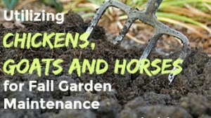 Utilizing Chickens, Goats and Horses for Fall Garden Maintenance
