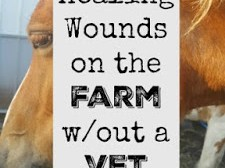 Healing Wounds on the Farm(without a vet)