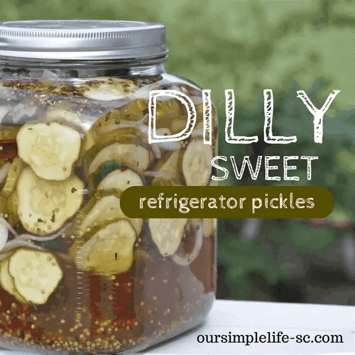 dilly sweet refrigerator pickles