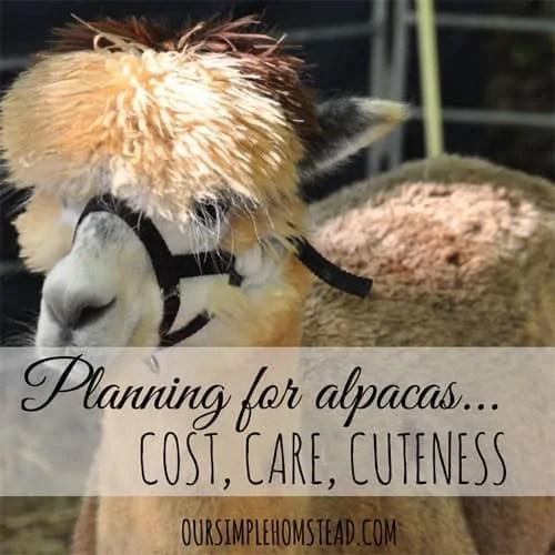 planning for alpacas