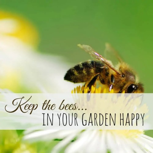 Keep Your Bees Happy