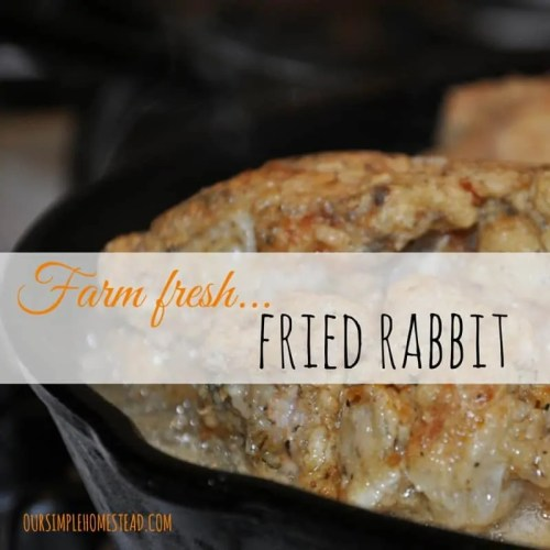 farm fresh fried rabbit