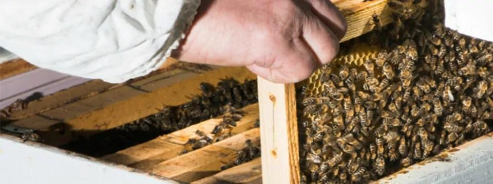 Beginning Beekeeping Supply List