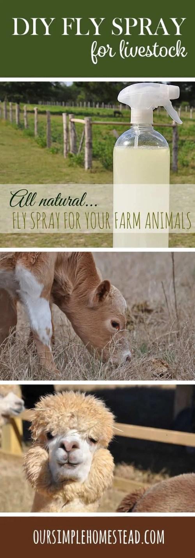DIY Homemade Fly Spray for Livestock
