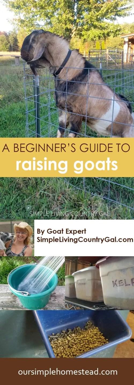 A Beginner's Guide to Raising Goats
