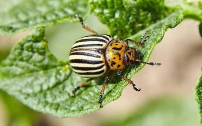 How To Keep Bugs Out Of A Vegetable Garden Naturally