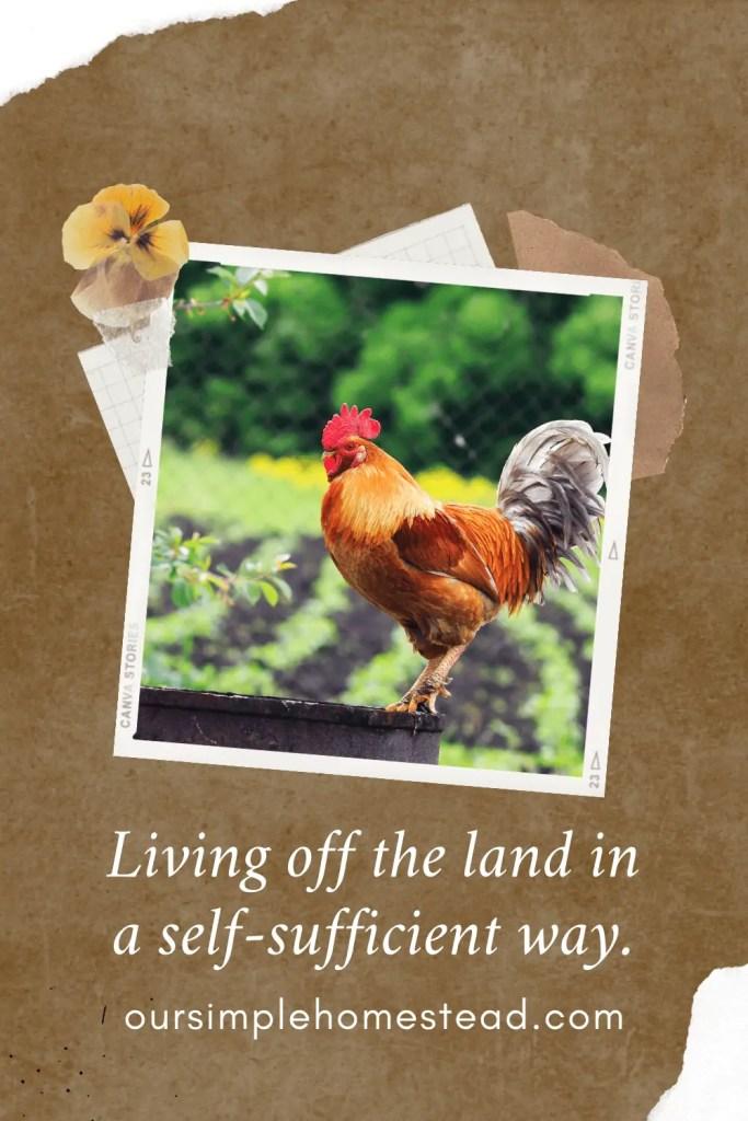 homesteading trend