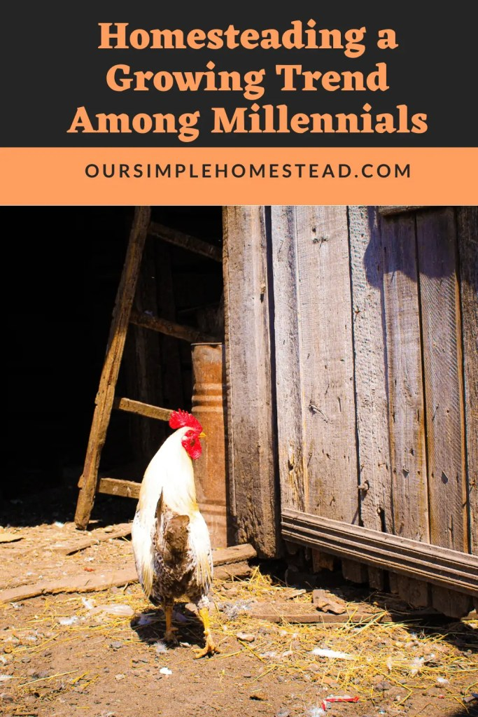 Whether you're new to homesteading or you're a professional homesteader, what you may not know is how much of a trend homesteading has become in recent years.