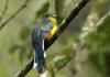 Ragam burung di kawasan Gunung Gede-Pangrango