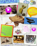 http://arnedillo.edu.glogster.com/vultures/