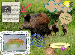 http://www.glogster.com/juancarlosgh/the-wild-boar/g-6kqt7j66a83g98452025aa0