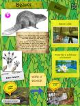 http://annulla.edu.glogster.com/beaver-bbr
