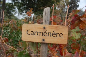 Introduction to Chilean Wine