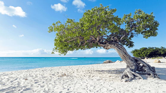 Things to do in Aruba on a long weekend