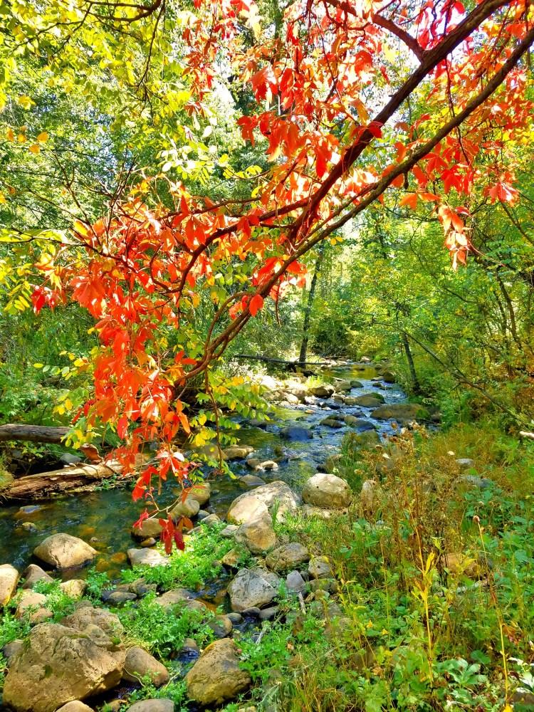 Bright orange leaves hang over the creek