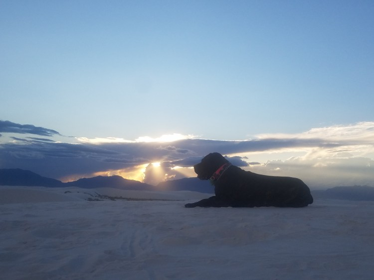 Daisy the Cane Corso laying down at White Sands New Mexico