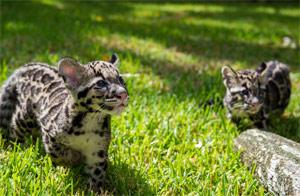 © Houston Zoo