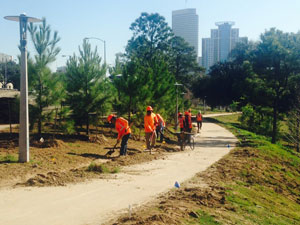 houston_bayou-park-tree-planting