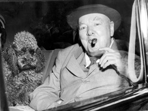 pet_churchill