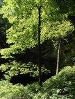 Sunlight shimmering through trees.