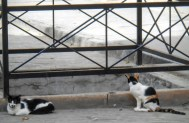 Cats could be seen all over on ledges and window sills. These two liked it closer to the ground.