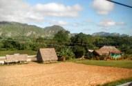 Small tobacco farm with barn.