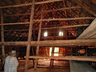 The pole structure in the barn allows plenty of racks for drying the hanging tobacco leaves.