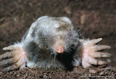 Moles, Voles, and Gophers