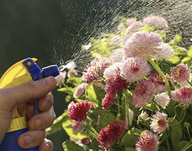 Close-up photo of man spraying flowers with pesticide