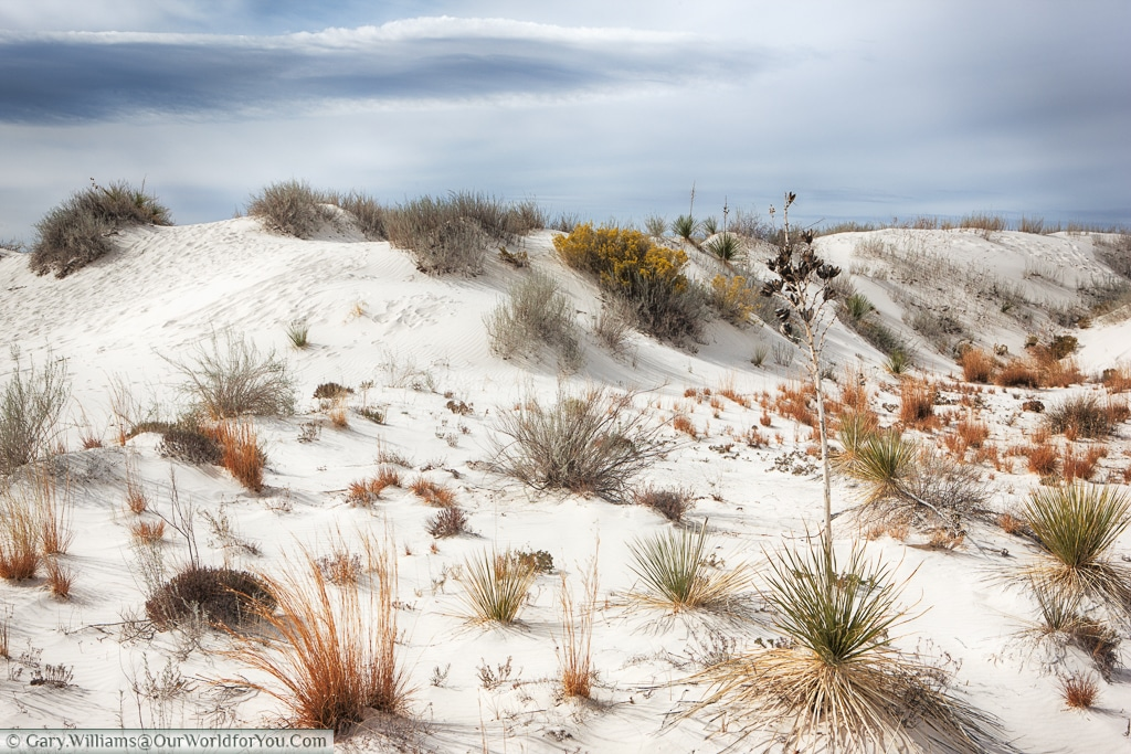 some life at the edges of the White Sands National Monument, New Mexico