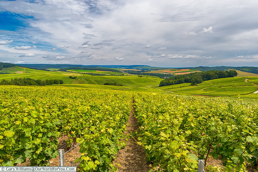 A view just outside Mutigny, Champagne, France