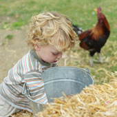 boy_rooster