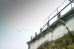 Sea gulls fly blissfully above the walls of the Recreation Yard