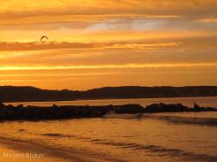 Bird flying through sunset (800x600)