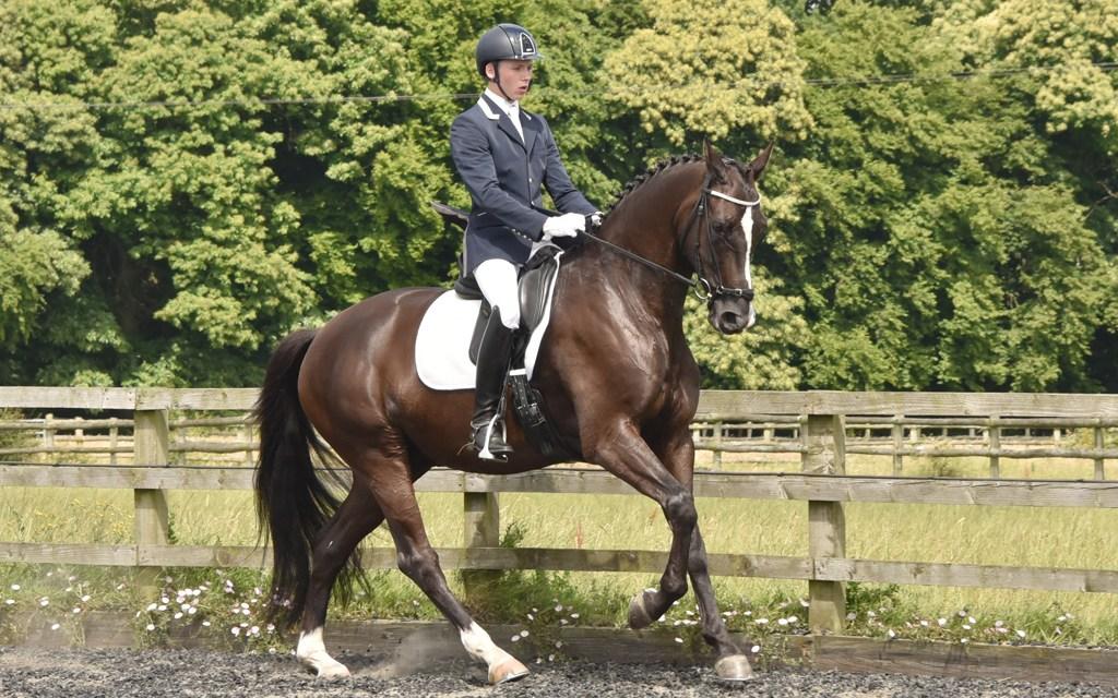 Judges applaud well-ridden horses and well-ridden tests