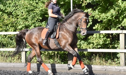 Leanne's Basics, part 4, — Medium trot and canter strides