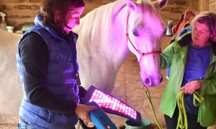 Seeing the red light in equine therapy