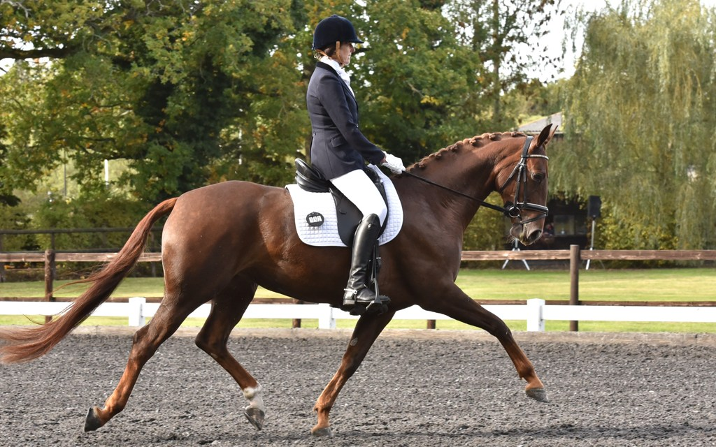 Dressage results: Parwood, Surrey, 1 November