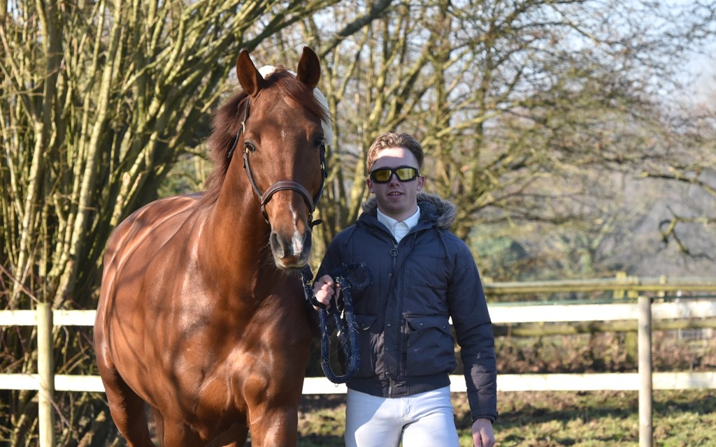 Building an unqualified success in dressage, part 5 — Josh Hill