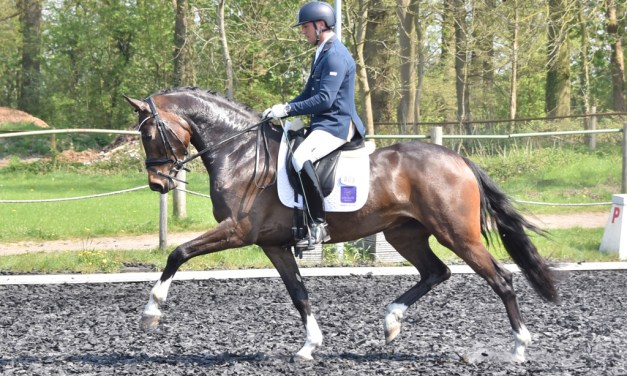 Dressage results: Oldencraig, Surrey, 31 May 2019