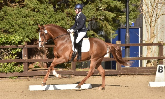 Dressage results: Merrist Wood, Surrey, 14 March 2020