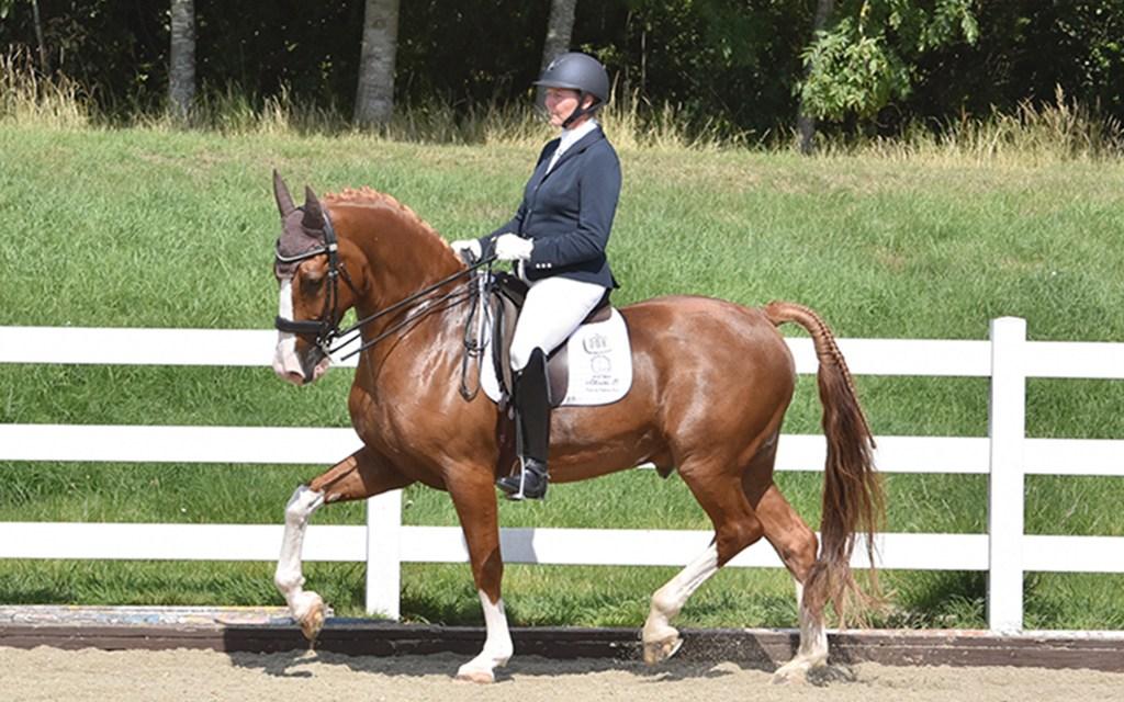 Katharine Lewis — the horse that helped her make Albertho B