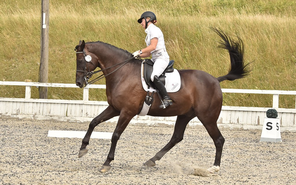 Dressage riders show off their training at re-opened Kent show centres