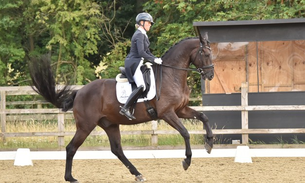 Top riders show off horses with international potential at Parwood