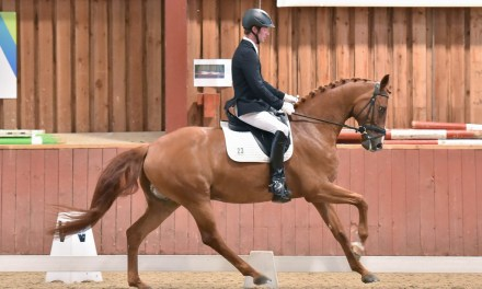 New faces join dressage riders preparing for big summer shows
