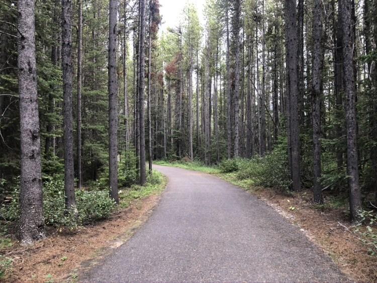 Bike path near Boulton Creek Campground