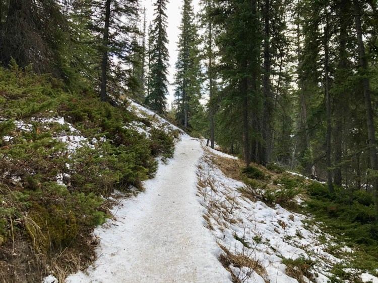 Maligne Canyon hiking trail in winter