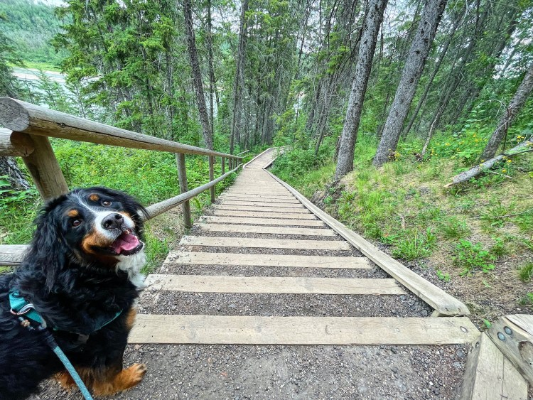 Devon River Valley Trail with the Legs of Fire Stairs