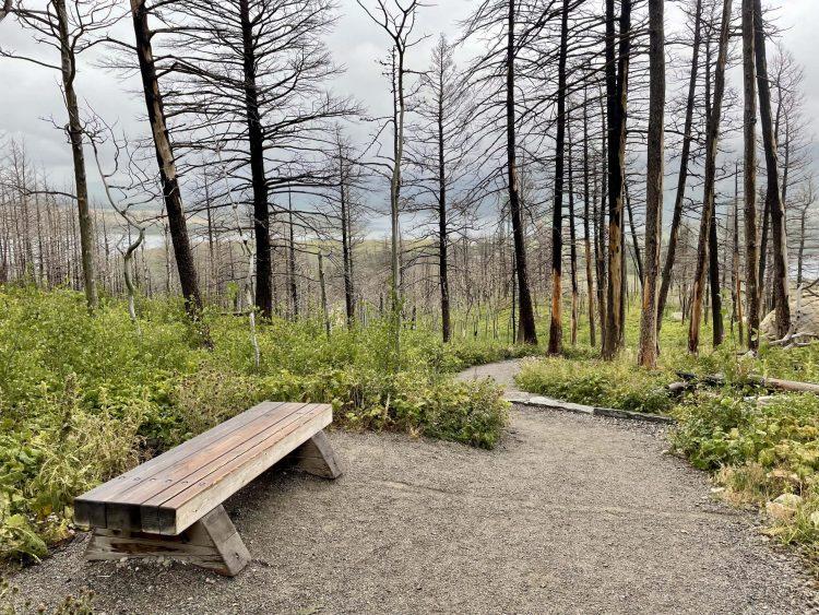 Bear's Hump trail bench