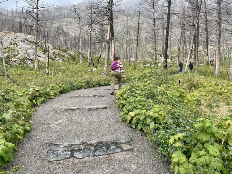 Bear's Hump trail in Waterton National Park